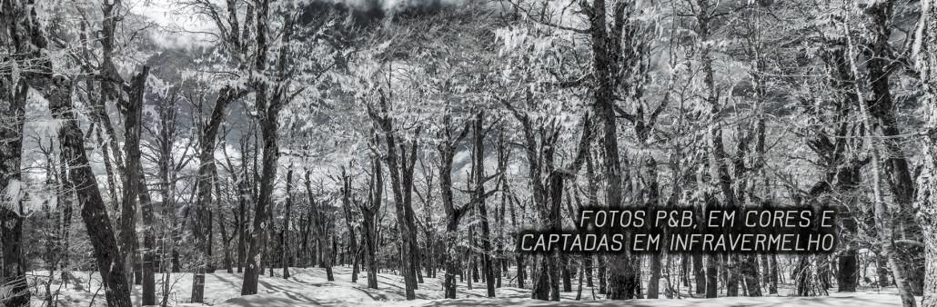 Fotos Celso Cavallini e Online Quadros (12)
