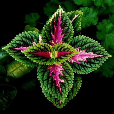 Flores Cor 001 Duayer