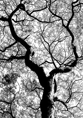 Natureza PB 002 Duayer