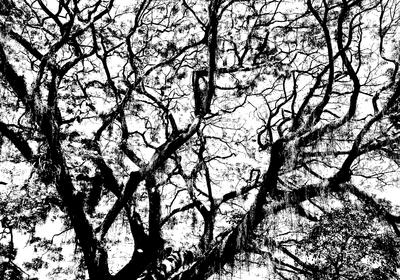 Natureza PB 003 Duayer