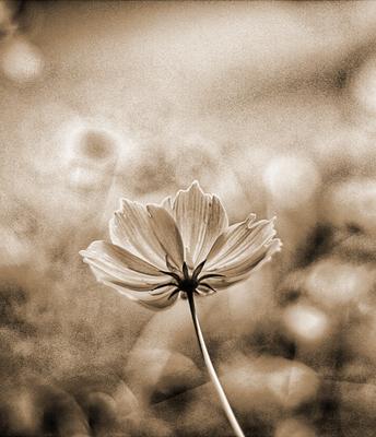 Flor em Sépia Vertical