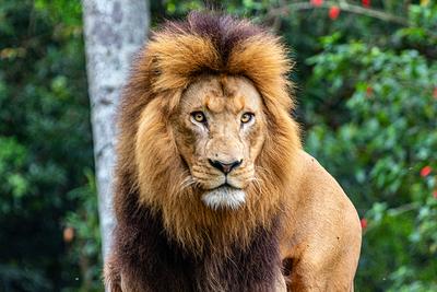 O Rei Leão 01