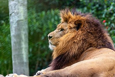 O Rei Leão 02