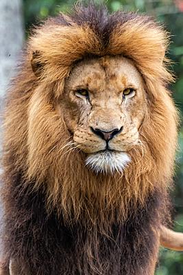 O Rei Leão 05