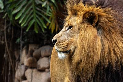 O Rei Leão 09