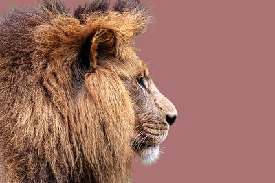 Leão com fundo pastel