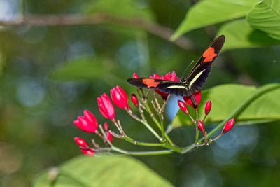 Borboleta sobre flor vermelha