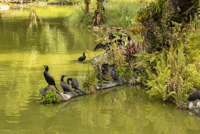 Grupo de patos no lago