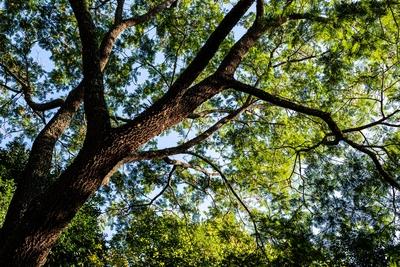 galho de árvore contra céu azul
