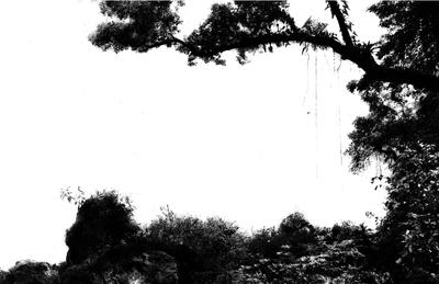 Floresta com fundo branco 01
