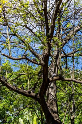 Árvore com galhos no outono