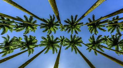 Série Flora - Paralelas