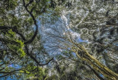 Série Flora - Céu Rendado
