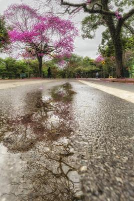 Série Flora - Reflexos depois da chuva