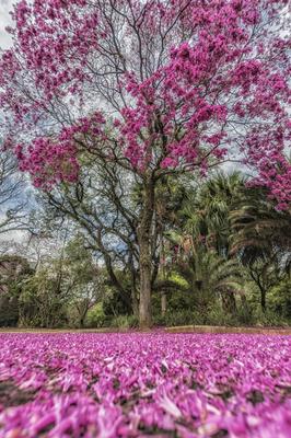 Série Flora - Tapete e tapeceiro