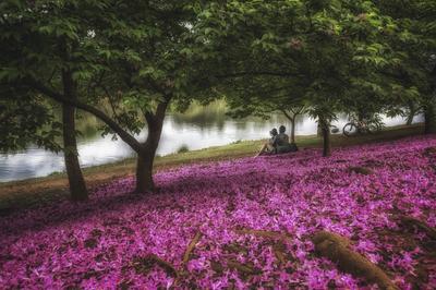 Série Flora - O Amor é cor de rosa