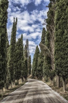 Série Caminhos - Estrada de Ciprestes