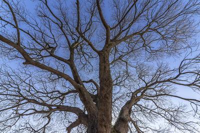 Série Flora - Árvore no Inverno I