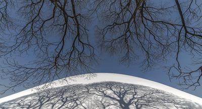 Série Flora - Sombra de Inverno I