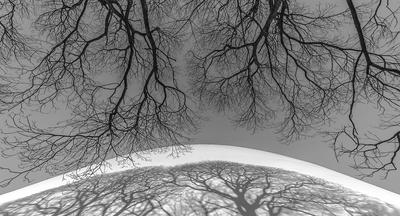 Série Flora - Sombra de Inverno em PB I