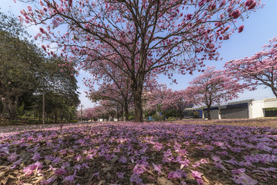 Série Flora - Tapete Rosa de Primavera I