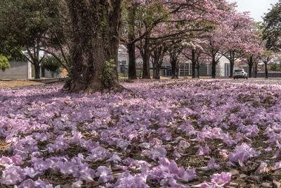 Série Flora - Tapete Rosa de Primavera II