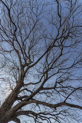 Série Flora - Ramos de Inverno Direita