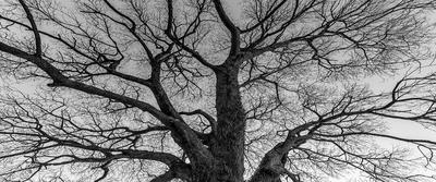 Série Flora - Árvore no Inverno em PB I Tam 3