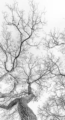 Série Flora - Ramos de Inverno em PB V - Corte especial
