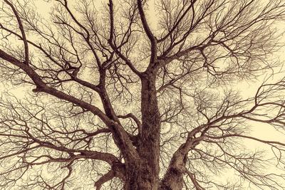 Série Flora - Árvore no Inverno - Nostalgic