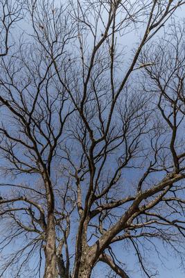 Série Flora - Árvore no Inverno III