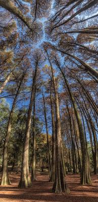 Série Flora – Bosque Gótico