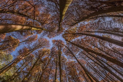Série Flora – Cores de Outono I