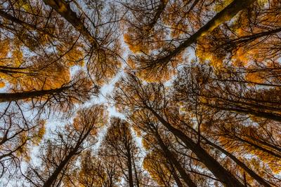 Série Flora – Cores de Outono II