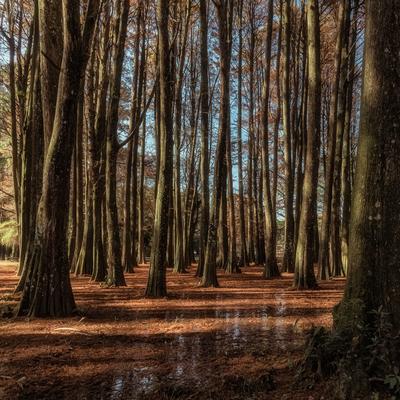 Série Flora - No Bosque