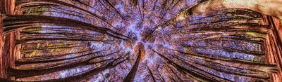 Série Flora - Bosque de Outono Panorâmico