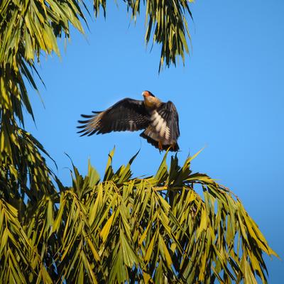 o pouso da águia