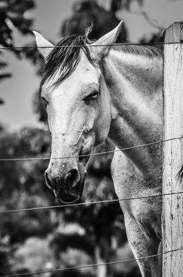 cavalo_1