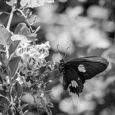 borboleta_2