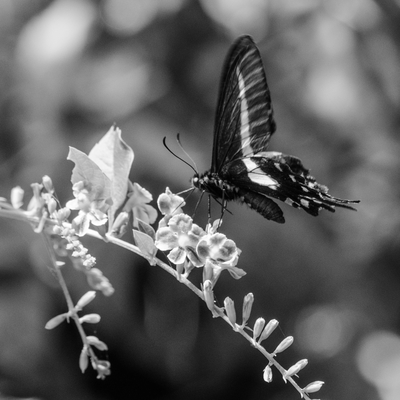 borboleta_3