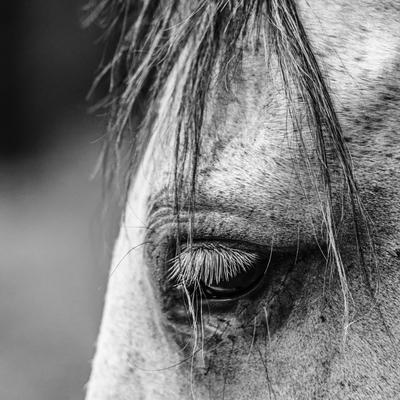 cavalo_3