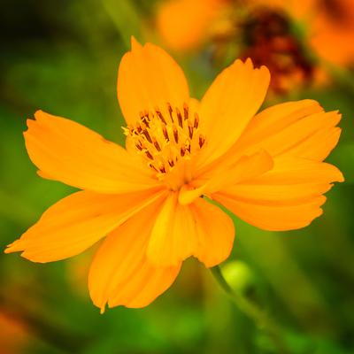 flor_3