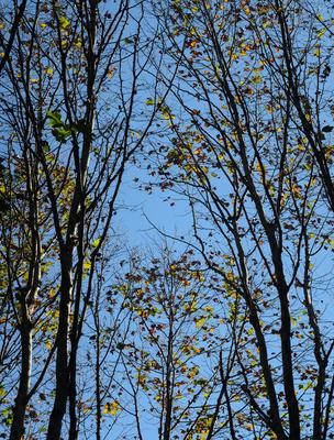 folhas de outono_em