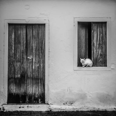 o gato na janela