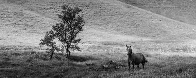 o cavalo e a árvore