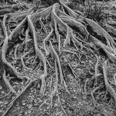 raízes_em