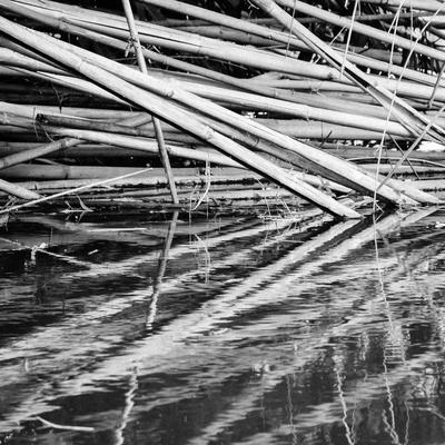 emaranhado de bambus