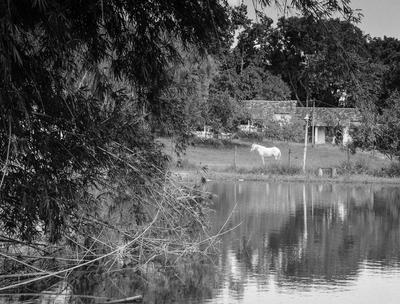 o cavalo e o lago