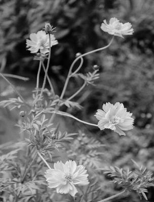 quatro flores