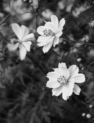 trio de flores